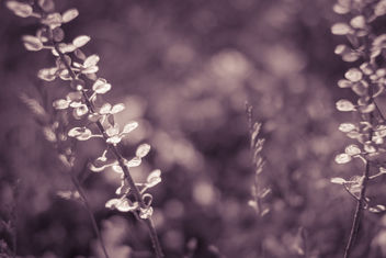 Pure nature - Free image #385957