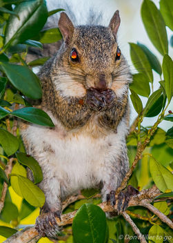 Squirrel - image gratuit #388517