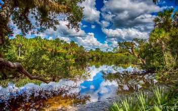 Myakka River - Free image #389487