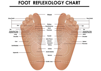 Foot Reflexology Chart - vector #390567 gratis
