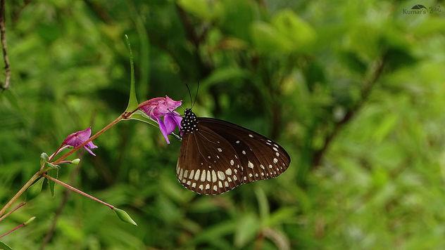 Butterfly on Flower Near Pune - Free image #392747