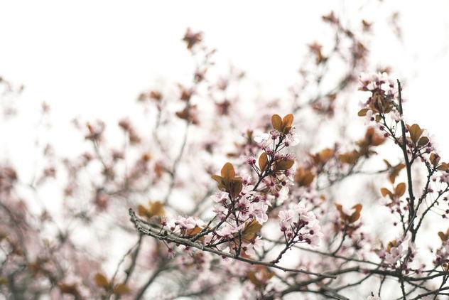 Pink Spring Flowers - Free image #394487
