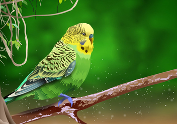 Beautiful Budgie On a Branch Vector - бесплатный vector #395027