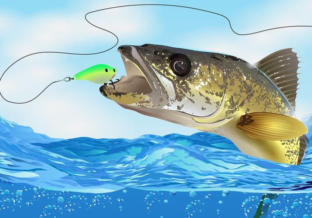 Walleye Fish Take The Bait - Free vector #395037