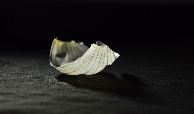 Garlic Wrapper - Free image #395077