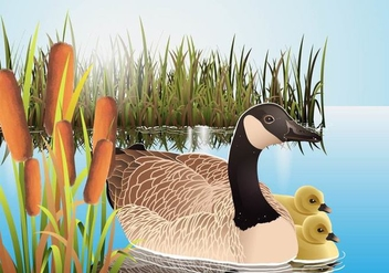 Cattails Vector With Canadian Goose - Free vector #403917
