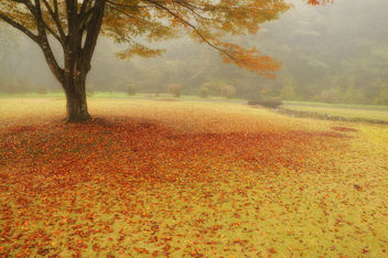 Path of fallen leaves (Ver2) - Free image #405277