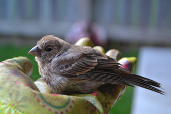 Baby House Finch Eating From My Hand - image #410277 gratis