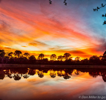 Florida Gold - Free image #412697