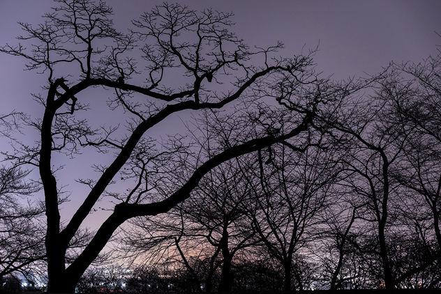 Silhouette Art - Free image #413077