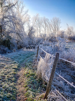 Frost Trail - Free image #413297