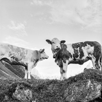 Alpine cows - image #415067 gratis