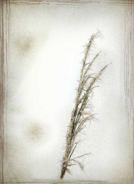 Winter grass - Free image #415077