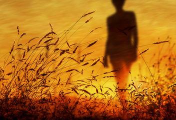 Summer Wind - Kostenloses image #417717