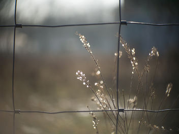 The good things are behind the fence - HFF! - image gratuit #421157