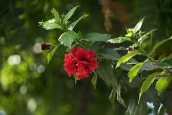 Red flower - image gratuit #421607