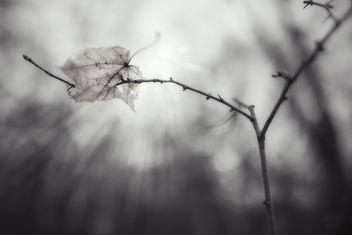 Leaf 2.0 - бесплатный image #425567
