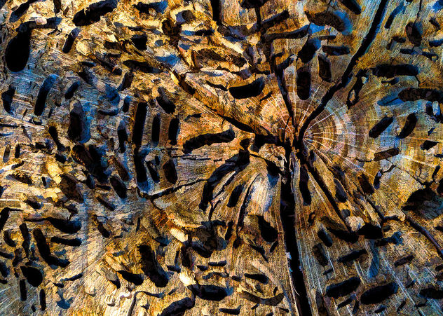 Dead wood - Kostenloses image #427017