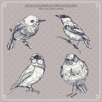 set of vector graphic birds illustration - vector gratuit #135257