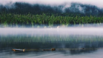 Fog on the lake in forest - image #136227 gratis