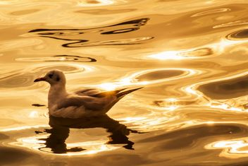 Seagull on the water - image #136337 gratis