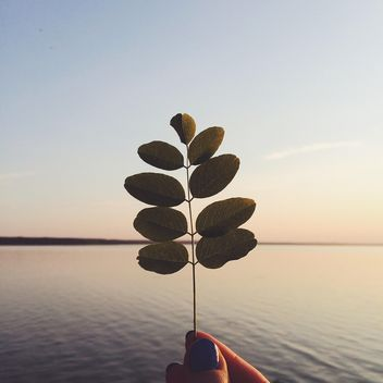 Twig with leaves in hand at sunset - image #136597 gratis