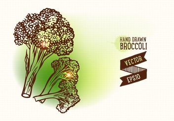 Free Hand Drawn Broccoli Vector Illustration - Free vector #145647