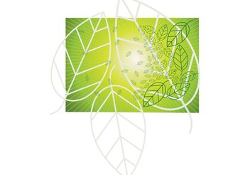 Leaf Vector Graphics - vector gratuit #145717