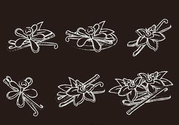 Chalk Drawn Vanilla Flower Vectors - Free vector #146197
