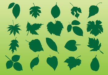 Plant Leaves Vectors - бесплатный vector #146227