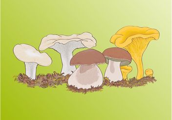 Wild Mushrooms - Free vector #147327