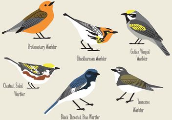 Hand Drawn Warblers Vectors - бесплатный vector #156607