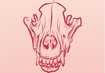 Dead Animal Skull - vector gratuit #156877