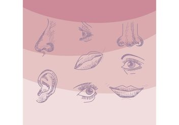 Four Senses Vectors - vector gratuit #157587