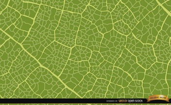 Green Leaf Texture Background - Kostenloses vector #164127
