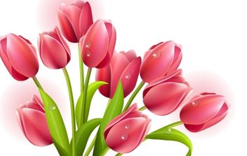 Tulips Bouquet Vector - Free vector #172197