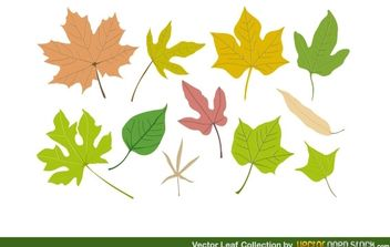 Vector Leaf Collection - vector #174757 gratis