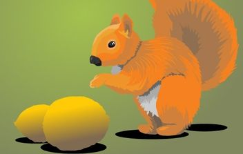 Squirrel - Free vector #178687