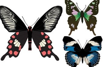 Three Beautiful Butterfly Vectors - Free vector #178957