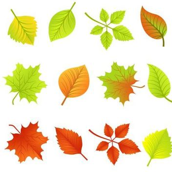 Fallen Autumn Leave Pack - vector #179617 gratis