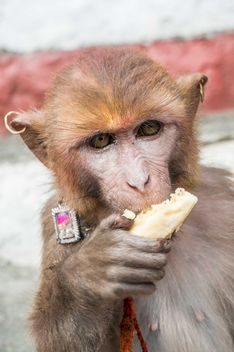 Monkey eating banana - image #182897 gratis