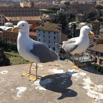 seagulls on roof - image #183087 gratis