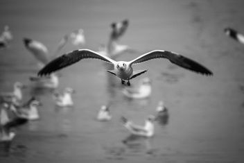 Flying seagulls - image #183447 gratis