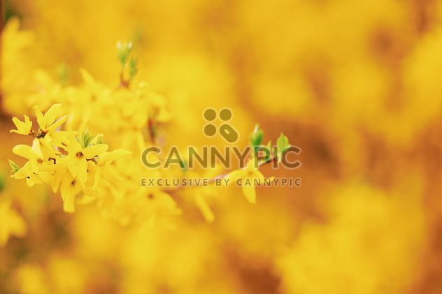 Small yellow flowers - Free image #183707