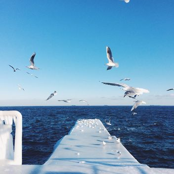 Seagulls flying over the sea - image #183967 gratis