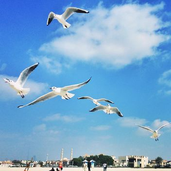 Gulls in flight against a blue sky - image #184067 gratis