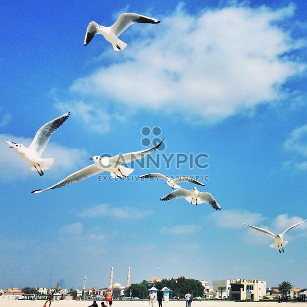 Gulls in flight against a blue sky - Free image #184067