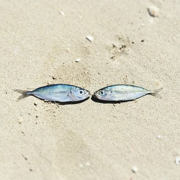 Two fishes on sand - Free image #184087