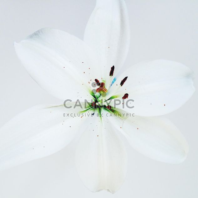 Closeup of white flower - Free image #184187