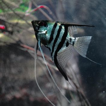 Striped fish - Free image #184527
